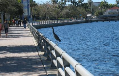 riverwalk-with-bird